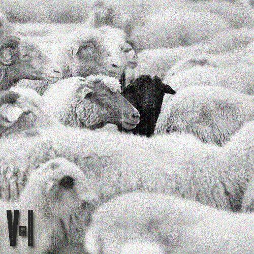 Black Sheep Cover MAIN